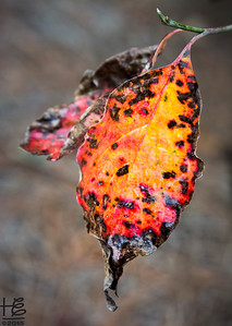 A vibrant fall leaf