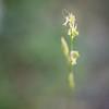 Whimsical grass flower
