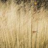 Leaf in tall grass