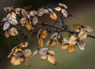 Fall leaves in golden light