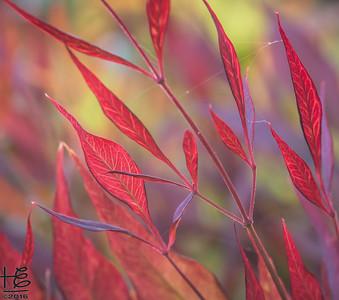 Afternoon light on leaves