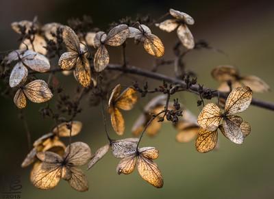 Fall leaves in golden light