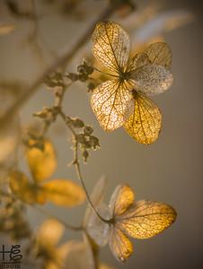 Leaves in the golden light