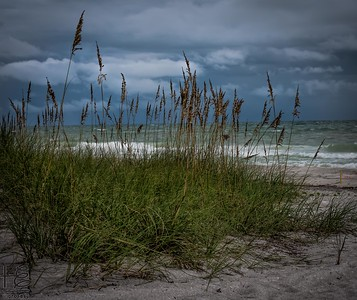 Sea oats on stormy beach