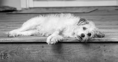 Maizie on  the porch