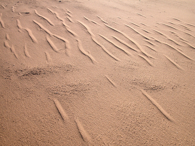 Sand ripples on wet sabkha in the Huqf region, Oman