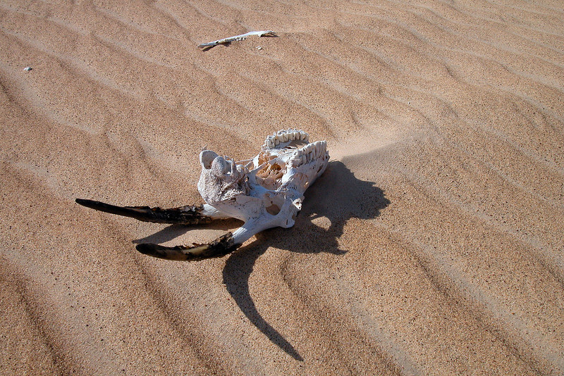 Sand-blasted remains in the Wahiba desert, Oman