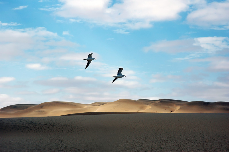 Seagulls over sand dunes along the Skeleton Coast, Namibia
