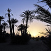 Sunrise at desert oasis, southern Morocco