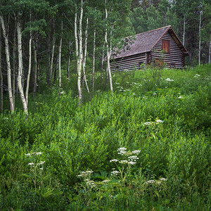 Cabin and Aspen