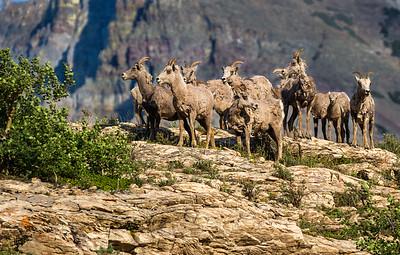Long Horn Visitors