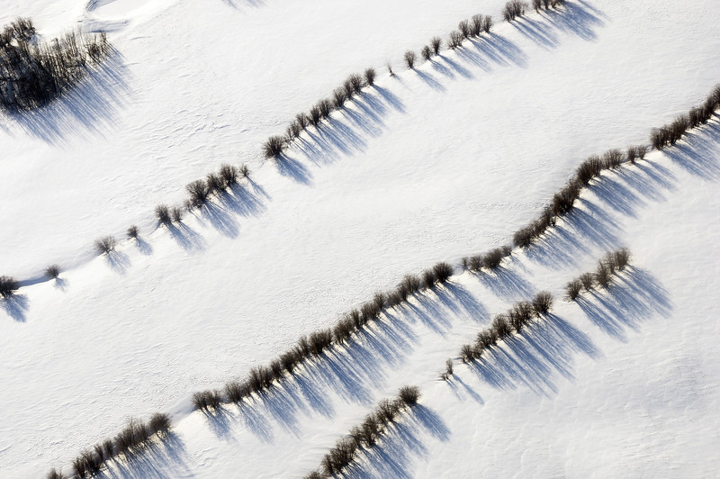 Tree lineaments in snowy Alberta plains, Canada