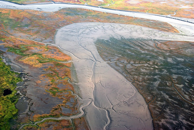 Dendritic creeks in the Susitna Flats, a tidal area situated in between the mouths of the Susitna and Little Susitna rivers along the north side of the Cook Inlet in Alaska