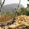 Corn harvest and Zuma rock monolith near Abuja, Nigeria