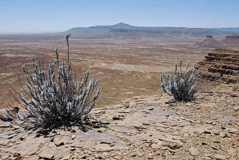 Isolated plants on flat-topped ridge in the Karoo, South Africa