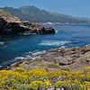 Point Lobos 4