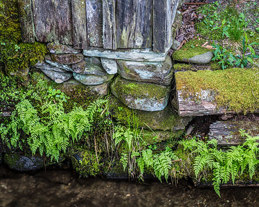 Fern & Moss at John Cable's Mill