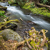 Creek & Roots
