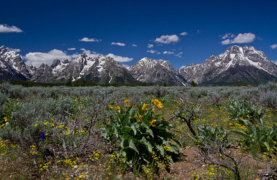 Prairie Spring and The Tetons