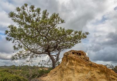 Torrey Pines 6