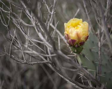 Torrey Pines 2