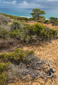 Torrey Pines 5