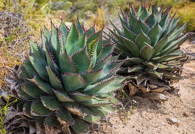 Torrey Pines 1