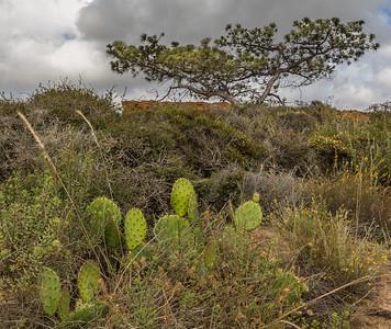 Torrey Pines 3
