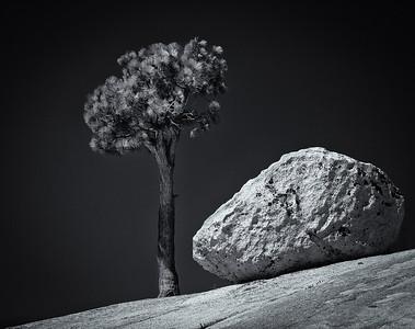 Rock & Pine