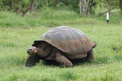 Giant Tortoises 2015 1884