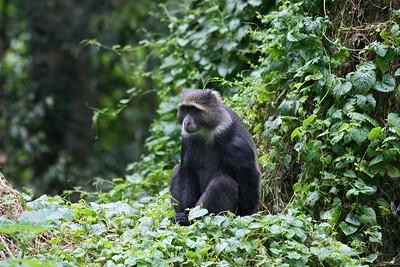 monkey arusha