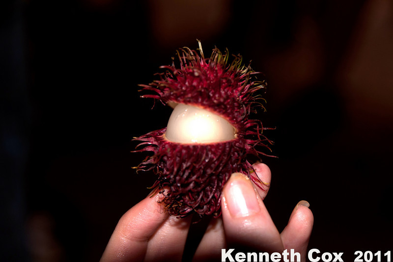 Lychee fruit on the spice tour.