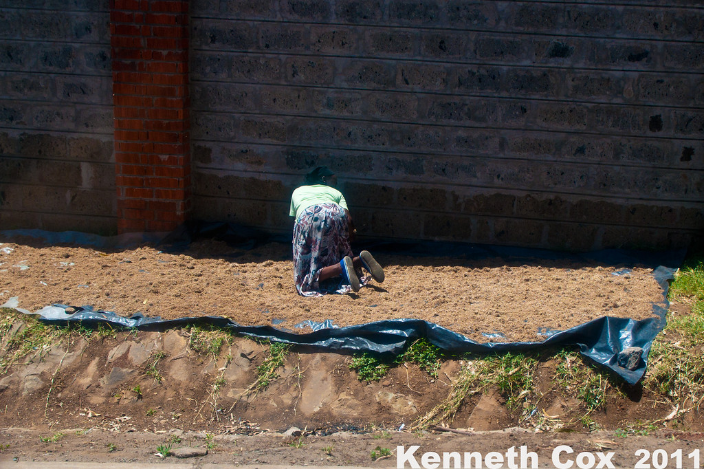 A woman drying out sorghum by the roadside to make chang'a, an illegal and potentially lethal brew, consumed by the down and out in Kibera. There is so much methyl alcohol in it that bottles can be cold to the touch, and the treatment for poisoning is to drink vodka!