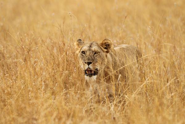 East Africa, Serengeti and Zanzibar