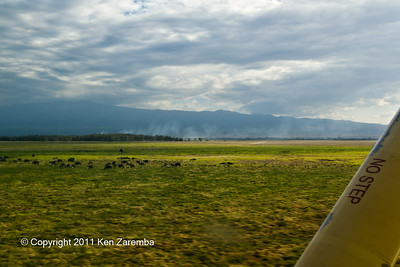 Herd of Cape Buffalo on take off from Kilimanjaro Royal Court airstrip, Amboseli National Park