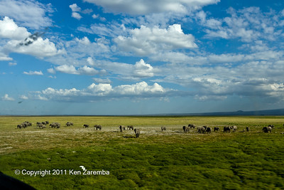 Herd of Elephants on take off from Kilimanjaro Royal Court airstrip, Amboseli National Park