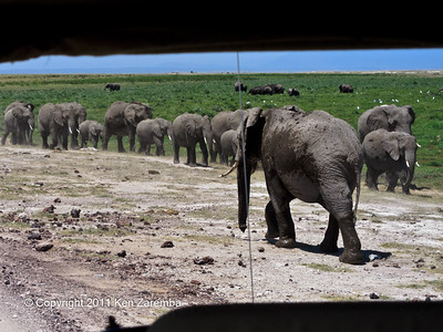 The African Elephants of Ambolsei National Park.