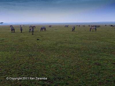 Common Zebra on the plains