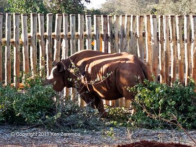 Maxwell the blind Rhino at the Nairobi Elephant Orphanage