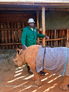 A baby Rhino at the Nairobi Elephant Orphanage