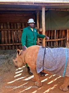 A baby Rhino at the Nairobi Elephant Orphanage