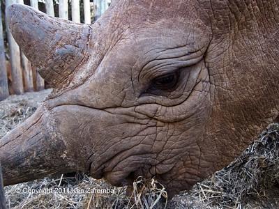 Up close with a Rhino at the Nairobi Elephant Orphanage