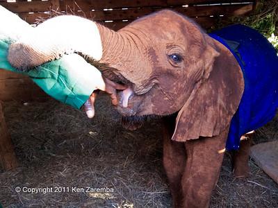 Ishanga, our adopted baby girl elephant at the Nairobi Elephant Orhpanage