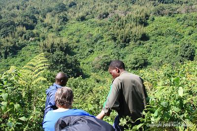 Descending through the jungle in pursuit of Mountain Gorilla  group 13