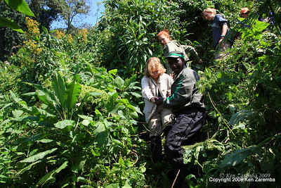 Descending through the jungle in pursuit of Mountain Gorilla  group 13