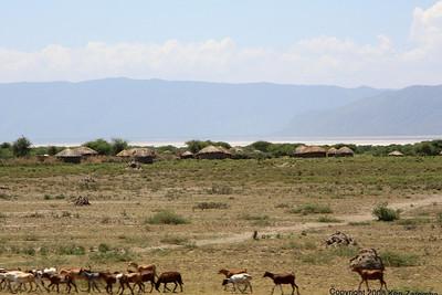 Masai village between Arusha and Lake Manyara Tanzania, 12/31/08