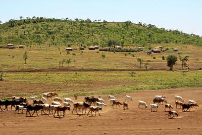 Rural Masai village between Arusha and Lake Manyara Tanzania, 12/31/08
