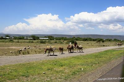 Hauling asses, near Lake Manyara Tanzania, 12/31/08