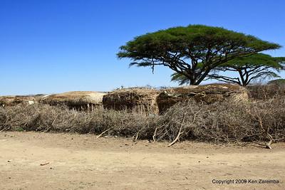 Exterior Maasai village scene (note protective wall), Tanzania 1/03/09