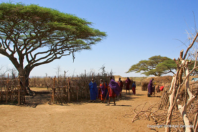 Fenced coral in center of Maasai village, Tanzania 1/03/09